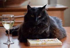 Frank Lloyd Rollie... (tobyhume) Tags: frank loyd wright frozen spheres prarie style feline tile wine