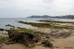 IMG_3701 Oyambre, Cantabria, 05-2017 (Maite Urrutxi) Tags: naturaleza