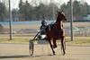 Berlin Trabrennbahn Mariendorf 18.3.2018 (rieblinga) Tags: berlin tempelhof mariendorf trabrennbahn sport wetten pferde rennen 1832018