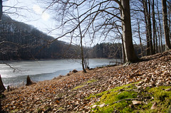DSC_0095.jpg (krst3nmllr) Tags: altkünkendorf buchenwald grumsin winter