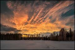 Sunset (Jonas Thomén) Tags: sunset solnedgång panorama field åker skog forest woods clouds moln sky himmel kväll evening orange 4x2 hdr