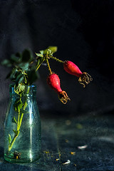rosehips (borealnz) Tags: rosehip berry seed flower glass bottle