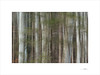 Waldgeist (E. Pardo) Tags: waldgeist bosque wald forest árboles trees bäume troncos woods formas formen forms baumstämme