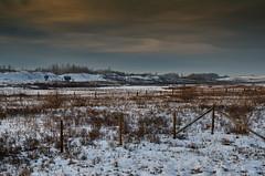 Nose Creek Winter Landscape (Bracus Triticum) Tags: nose creek winter landscape calgary カルガリー アルバータ州 alberta canada カナダ 11月 十一月 霜月 jūichigatsu shimotsuki frostmonth autumn fall 平成29年 2017 november