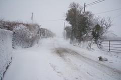 DSC_8008 (seustace2003) Tags: baile átha cliath ireland irlanda ierland irlande dublino dublin éire glencullen gleann cuilinn st patricks day zima winter sneachta sneg snijeg neve neige inverno hiver geimhreadh