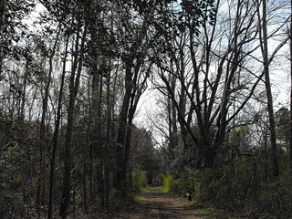 Trees Along The Trail.