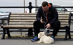 Dog&Bone (Hodd1350) Tags: poole dorset sandbanks bench man male dog phone sandbanksferry sitting zeisslens zeissbatis sony a7rll zeissbatis135mmlens