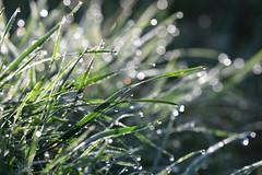 Aprés la pluie (Excalibur67) Tags: nikon d750 sigma contemporary 100400f563dgoshsmc paysage landscape pluie perle goutte eau prairie