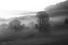 Follow the Leader (willblakeymilner) Tags: fog dawn sun sunrise mist copse backlit landscape moody yorkshire nikon d5300 sigma sheep black ethereal hills trees