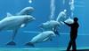 My Favourite Lesson (W@nderluster) Tags: canon eos 50mm delfino blue dolphins mare acquario aquarium genova liguria italy italia travel water communication