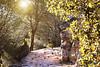 otoño (sitoelone) Tags: otoño zamora bosque