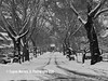 Montclair NJ (Themarrero) Tags: montclair montclairnj essexcountnj brookdalepark snow noreaster newjersey