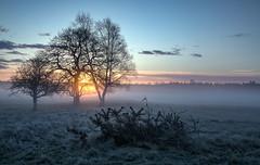 The Brecks at sunrise (Rod Martins) Tags: frost landscapes mist thebrecks clouds fog serene sky suffolk sun sunrise tranquility trees