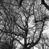 Tree (rotabaga) Tags: sverige sweden svartvitt göteborg gothenburg blackandwhite bw bwfp lomo lomography lubitel166 fomapan diy mediumformat mellanformat 120