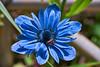 handheld shot for fun (brilandis) Tags: sigma 70300 apo 300mm f4 macro flower nature closeup close up