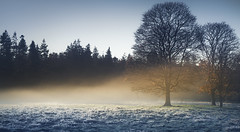 Cold Warmth (.Brian Kerr Photography.) Tags: scotland dumfriesandgalloway lockerbie trees coldmorning autumnal beautifulmorning formatthitech firecrest vanguarduk sonyuk a7rii colour availablelight outdoor outdoorphotography opoty mistymorning mist nature naturallandscape natural landscapephotography photography landscape dgwgo scottishlandscapes scottish visitscotland visitbritain scotspirit briankerrphotography briankerrphoto tree forest sky