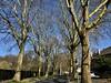 #Siegburg #Wochenende (RenateEurope) Tags: platanen renateeurope 2018 iphoneography streetphotography nature urbantrees cityscape siegburg alleenstrasse trees