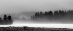 Some days are like this (evakongshavn) Tags: evatude foggyday 7dwf fog mist landscape landschaft paysage bnw bnwphoto bw blahblahscape blacknwhite blackwhite blackandwhite biancoenero blancoynegro sh svarthvit