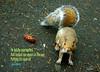 102/365 - Daily Haiku: Bold (James Milstid) Tags: dailyhaiku haiku haiga poetry jemhaiku squirrel critter parkinglot