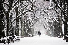Stockholm, February 19, 2018 (Ulf Bodin) Tags: strandvägen sverige winter walking outdoor perspective snow snö sweden tree snöar symmetry träd dog vinter stockholm snowing walkingthedog canonefm55200mmf4563isstm allé stockholmslän se