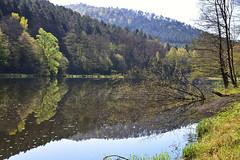 Renaissance (Excalibur67) Tags: nikon d750 sigma globalvision 24105f4dgoshsma paysage landscape reflexion reflets eaux étangs arbres trees vosgesdunord forest foréts printemps spring frühling