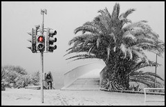 palm trees during Torquay blizzard (Torquay Palms) Tags: seafront bridge uk united kingdom gb great britain england the english riviera south devon devons beautiful torquay torbay tor bay traffic light red white whiteout storm blizzard 18th march 2018