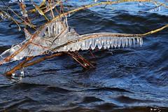 ice art at the lake (2) (HansHolt) Tags: ice ijs art kunst water winter storm wind cold koud trees bomen lake meer zandwinplas landscape landschap nijstad hoogeveen drenthe netherlands canon 6d canoneos6d canonef24105mmf4lisusm