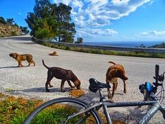 my friends (panoskaralis) Tags: idealbikes bike cycling road roadtrip dogs dogsfood nature green trees pine outdoor landscape sky bluesky lesvos lesvosisland mytilene greece greek hellas hellenic