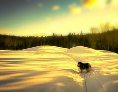 Peaceful stroll in my wonderworld (evakongshavn) Tags: landscape landschaft paysage winter golden goldenscape winterwonderland winterlandscape yellow blahblahscape 7dwf