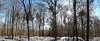 winter forest (photos4dreams) Tags: spaziergang walk feld wald wiese forest trees bäume photos4dreams p4d photos4dreamz