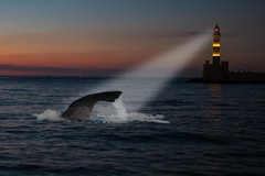 Whale watching at night (hibf_2004) Tags: alleskreta kreta2017 hibf2004 canon canoneos70d lightroom photoshop night whale wal nacht leuchtturm lighthouse meer kreta kriti griechenlang greece composing wasser water ozean himmel