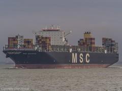 MSC Beatrice 01 (U. Heinze) Tags: cuxhaven vessel olympus nordsee norddeutschland elbe wasser ship schiff boot boat