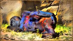 Time for a rest (boeckli) Tags: sydney tarongazoo gorilla affe ape animal animals australia australien tier tiere outdoor bunt farbig farbenfroh topaz topazsimplify textures texturen texture textur wild awardtree
