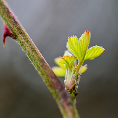 Brinklow Canal Walk 31st March 2018 (boddle (Steve Hart)) Tags: brinklow canal walk 31st march 2018 steve hart boddle steven bruce wyke road wyken coventry united kingdon england great britain canon 5d mk4 6d 85mm f14 prime 100mm f28 macro wild wilds wildlife life nature natural bird birds flowers flower fungii fungus insect insects spiders butterfly moth butterflies moths creepy crawley winter spring summer autumn seasons sunset weather sun sky cloud clouds panoramic landscape unitedkingdom gb