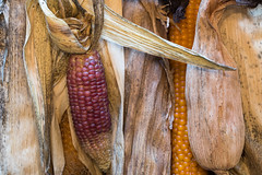 pharaoh's dream (jlodder) Tags: cob ears corn popcorn flickrfriday dream kitniyot