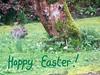 A real Easter Bunny (pefkosmad) Tags: easter eastersaturday easterweekend eastersunday easterday westsidecottage cardinham bodmin cornwall england uk holiday vacation garden cottage greetings bunny rabbit tree edited realeasterbunny bunnyshill