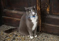 Allora!! mi fate entrare...  comincio ad arrabbiarmi... (fabrizio_buoso) Tags: felini felinos gatti gatos gatto gattiitaliani gattini chats chat cat cats animalidomestici