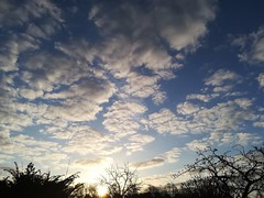 Sunrise today (daveandlyn1) Tags: huawei pralx1 sun sunrise treetops trees daybreak shrewsbury clouds smartphone