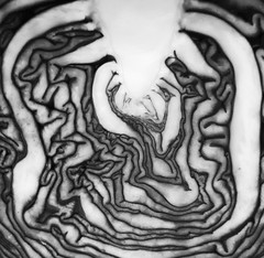 Braindead (Ren-s) Tags: macro minimalist abstract abstrait légume vegetable choux cabbage brain cerveau olympus em10 projet project 52 noir et blanc nb black white bnw contrast