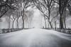 The Mall (jan.wallin) Tags: nikond850 newyork city usa winter travel snow us trees park centralpark