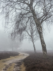 Hilversum 2018: Path of sadness (mdiepraam (30 mln views!)) Tags: hilversum 2018 westerheide heath landscape tree fog mist morning path