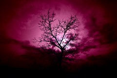 Infrared silhouette (fxdx) Tags: infrared silhouette tree sun sky ir rokinon 12mm prime f2