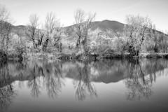 Torbiere del Sebino (Roberto Spagnoli) Tags: torba peat lake iseo biancoenero blackandwhite monocromo trees mountain reflections water landscape paesaggio nature italy