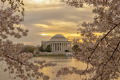 Cherry Blossom 2018 (brian.swogger) Tags: