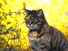 Our Beautiful  Erica  ... RIP.xxxx (carlene byland) Tags: sadness cat tabby love bloss ourcat beauty flowers yellow fur rainbowbridge