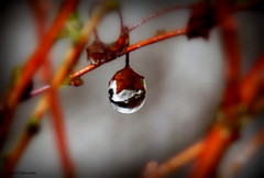 A water drop gem! (Toini O Halvorsen) Tags: drop droplet waterdrop gem pearl nature