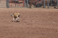 Queen Creek Junior Rodeo Assn. (twm1340) Tags: cottonwood az verdevalley fair fairgrounds arena horse event