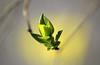 New Life! (Rolf-Schweizer) Tags: blooming green yellow naturephotography nature natur neckertal bauer bauernverband fotografie flickr farben fresh flower frost frühling flowers fox frühlingsbeginn schweiz swiss switzerland rolfschweizer rolfschweizerfotografie f frieden rolfschweizerphotography world epa new explore europe exif artphotography a