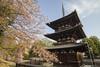 Kofukuji Temple Pagoda (Septimus Low) Tags: canon 60d nara tokina 1224 japan asia temple pagoda tokinaaf1224mmf4 kofukuji