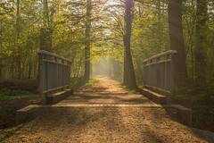 Golden Sunrise (ako_law) Tags: 6d auwald canonef2470mmf4lisusm canoneos6d contrejour dawn forest freistaatsachsen frühling gegenlicht gegenlichtaufnahme leipzig natur nature sachsen saxony sonnenaufgang spring sunrise wald deutschland de